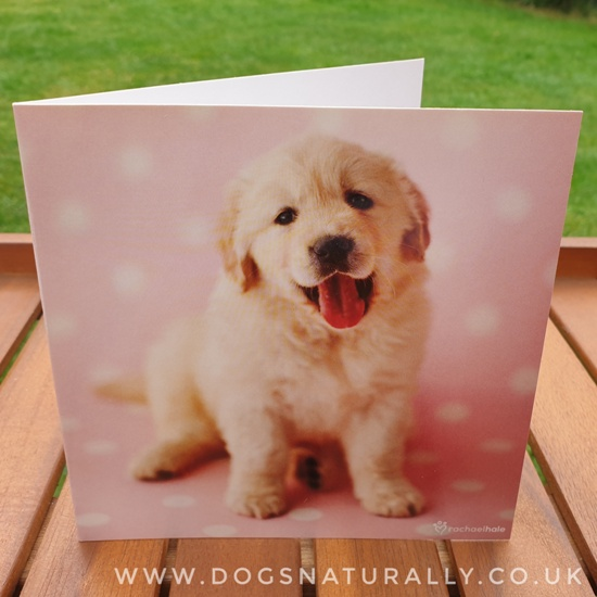 Golden Retriever Rachael Hale Greetings Card Samuel (Dots