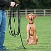 Clix 10m Training Line - Vizsla