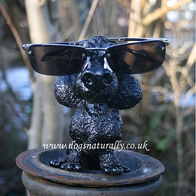 Poodle Glasses Holder (Curtis)