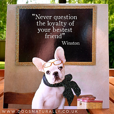 French Bulldog Friend Card
