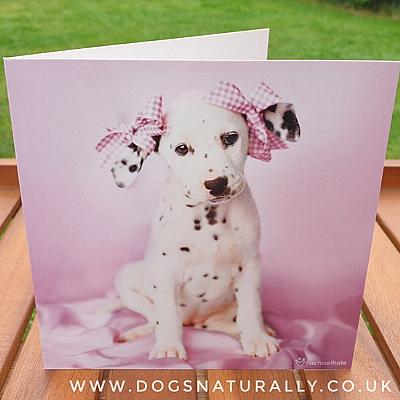 Dalmatian Rachael Hale Greetings Card Daysha