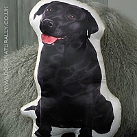 Labrador Cushion (Black)