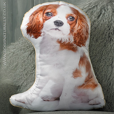 Cavalier King Charles Cushion (Blenheim)