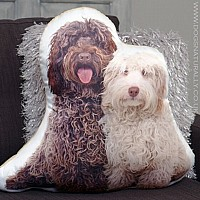 Labradoodles Cushion