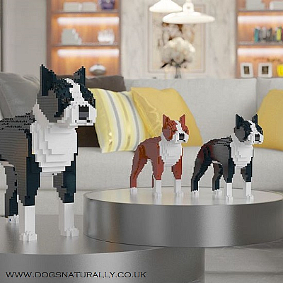 Boston Terrier Jekca Available in 2 Colours & 2 Sizes