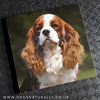Cavalier (Blenheim) Magnetic Note Pad Square