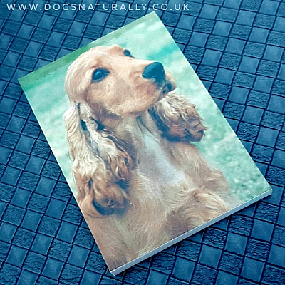 Cocker Spaniel Magnetic Notepad Gold   Dogs Naturally