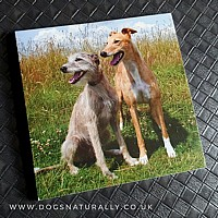 Greyhound & Lurcher Magnetic Note Pad Square