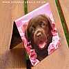 Chocolate Labrador Puppy Magnetic Page Marker (Dozer) Rachael Hale Bookmark