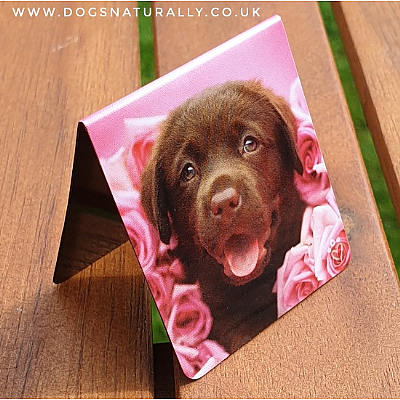 Chocolate Labrador Magnetic Page Marker (Dozer) Rachael Hale