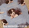 Christmas Wish Border Collie Christmas Wrapping Paper