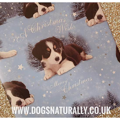 Border Collie Christmas Wrapping Paper & Tags