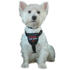 Dog Safety Harnesses