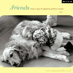 Dog Friendship Cards