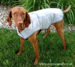 Swamp Cooler Dog Coats