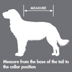 VizLite Measurement Guide