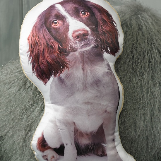 Springer Spaniel Cushion (Liver & White)
