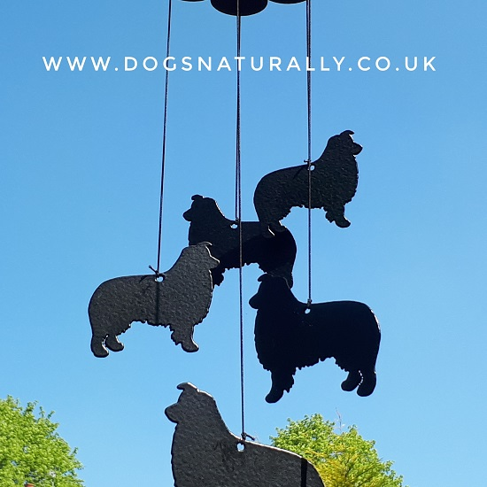 Border Collie Windchimes