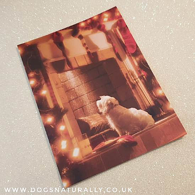 Expect Miracles Westie Christmas Card