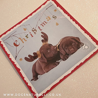 Chocolate Labrador Puppy Christmas Card