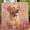 Amongst the Heather Labrador Greetings Card