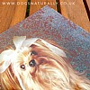 Yorkshire Terrier Rachael Hale Glittery Dog Card Monty Close Up