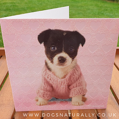 Jack Russell Rachael Hale Dog Glittery Greetings Card Kirby