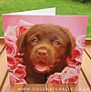 Help Chocolate Labrador Rachael Hale Greetings Card Dozer