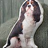 Tri-Colour Cavalier King Charles Cushion