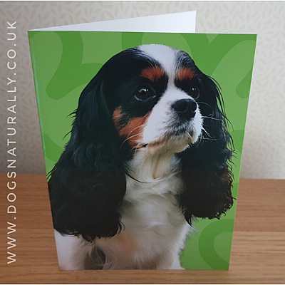 Cavalier (Tri Colour) Jazzy Greetings Card