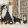 Bernese Mountain Dog Jekca - Group