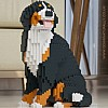 Bernese Mountain Dog Jekca (Sat)