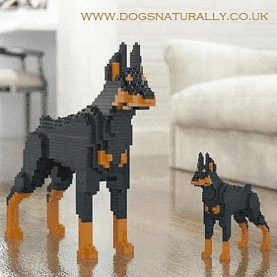 Dobermann Jekca Available in 2 Colours & 2 Sizes