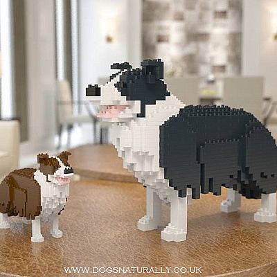 Border Collie Jekca Available in 3 Colours & 2 Sizes