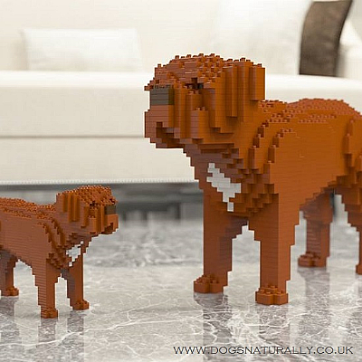 Dogue de Bordeaux Jekca Available in 2 Sizes