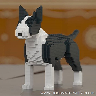 English Bull Terrier Jekca Available in 4 Colours & 2 Sizes