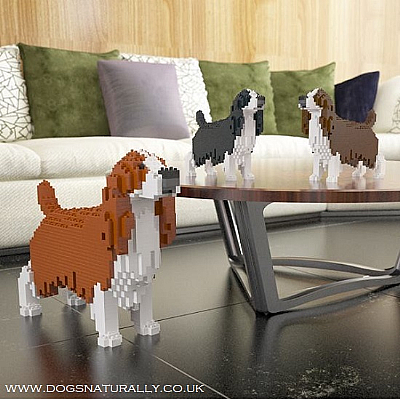 English Springer Spaniel Jekca Available in 3 Colours & 2 Sizes