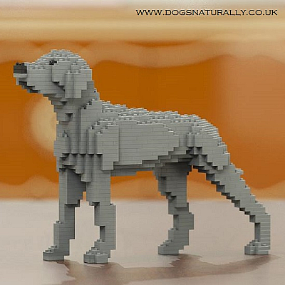 Weimaraner Jekca Available in 2 Sizes