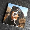 Bernese Mountain Dog Magnetic Note Pad (Square)