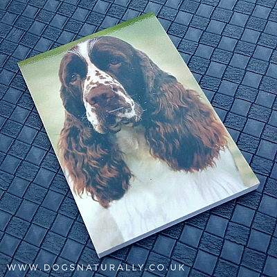 English Springer Spaniel Magnetic Note Pad Standard
