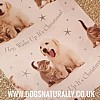 Puppy & Kitten Christmas Wrapping Paper & Tags