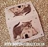 Puppy & Kitten Christmas Gift Tags