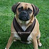 Brown Fleece Dog Harness