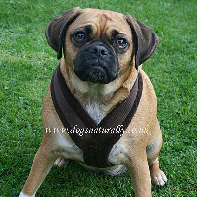 Brown Fleece Dog Harnesses Sizes 0 - 6
